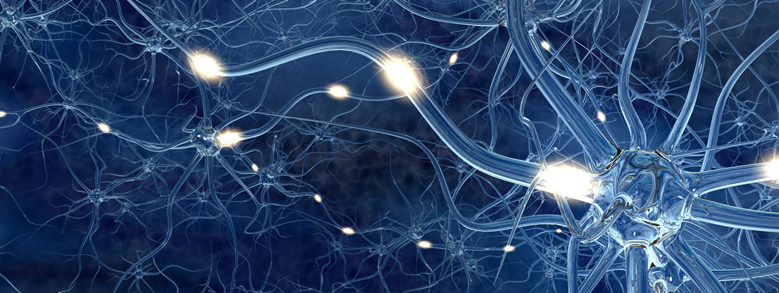 Synapses are stimulated
