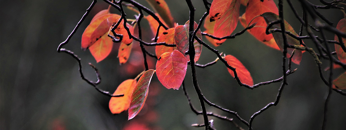 Autumn leaves in nature, silence