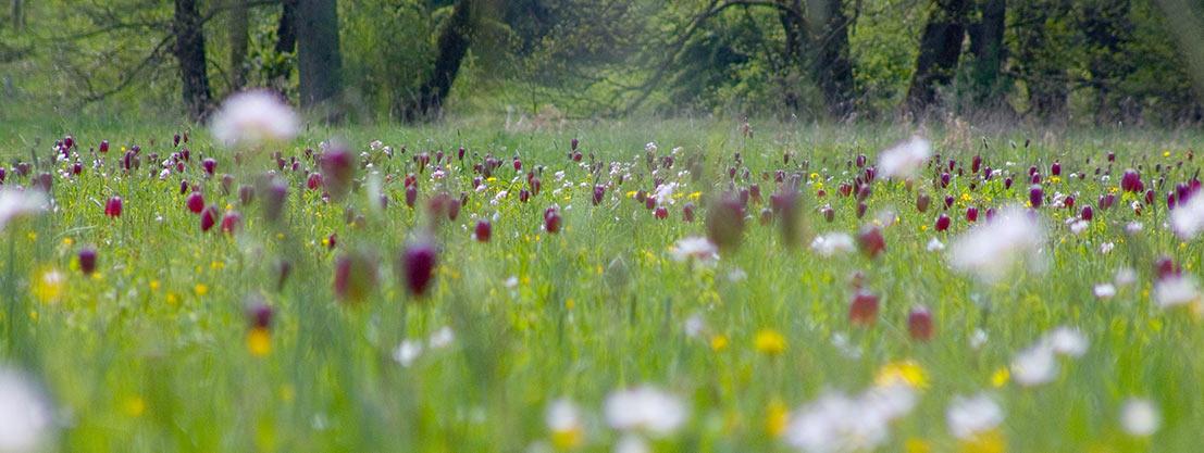 Wiese, Naturflächen zur Erholung