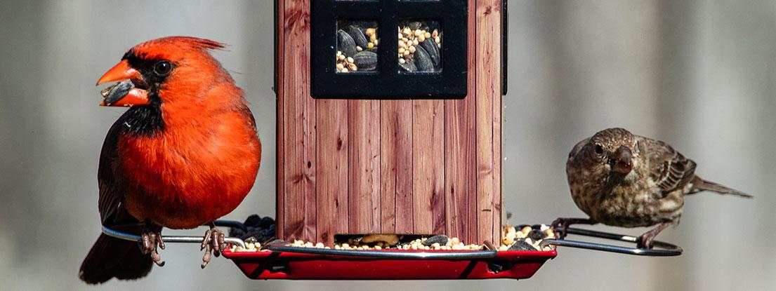 Vogelbeobachtung am Futterhaus, geistige Anregung