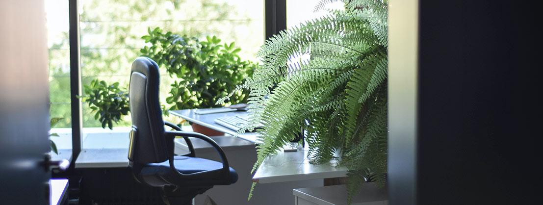 Bürobegrünung sorgt für Konzentration und Erholung.