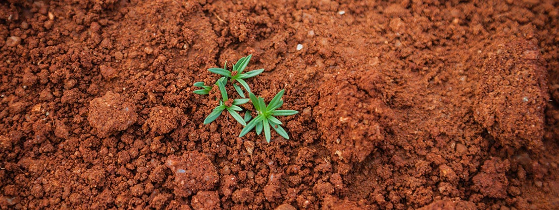 Pflanze in der Wüste, Kreislauf des Lebens