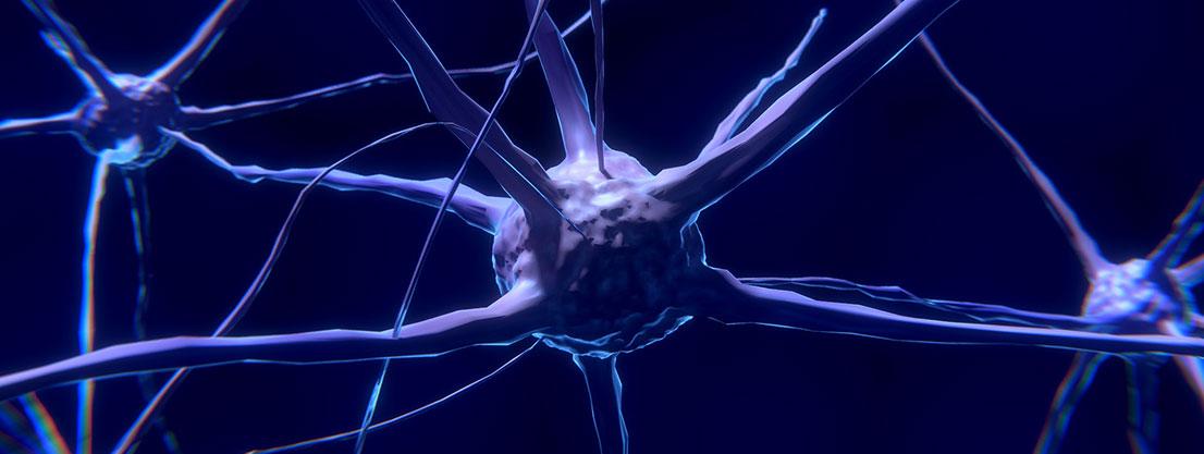 Neuronen in unserem Gehirn